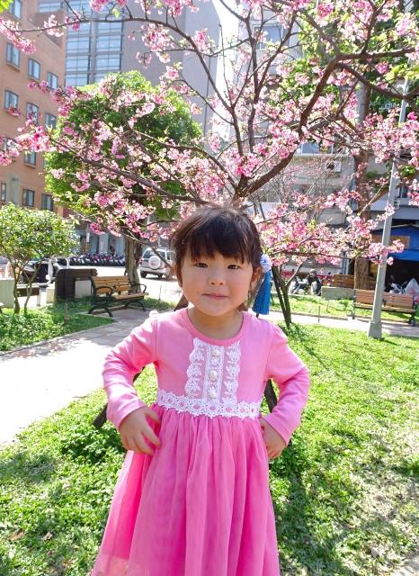 春天來公園賞櫻